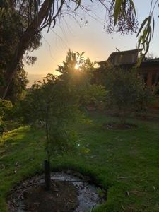 La paz de mi jardín.